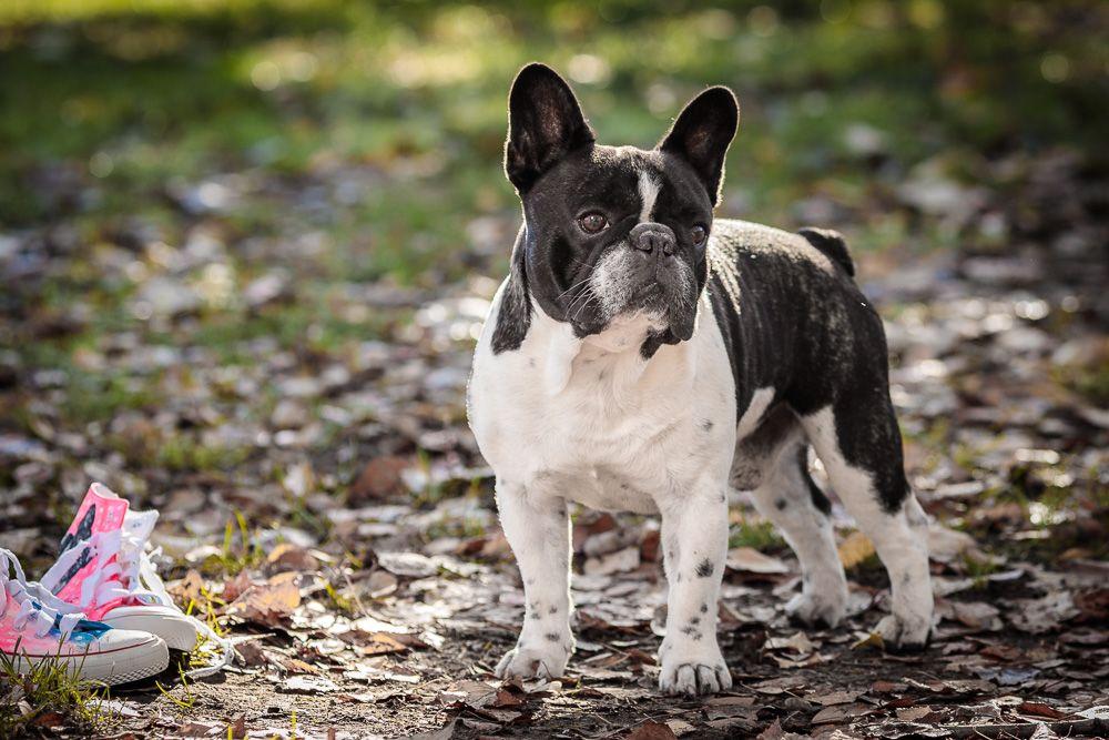 Sessão fotográfica com animal com cão coimbra - Fotógrafo profissional Coimbra