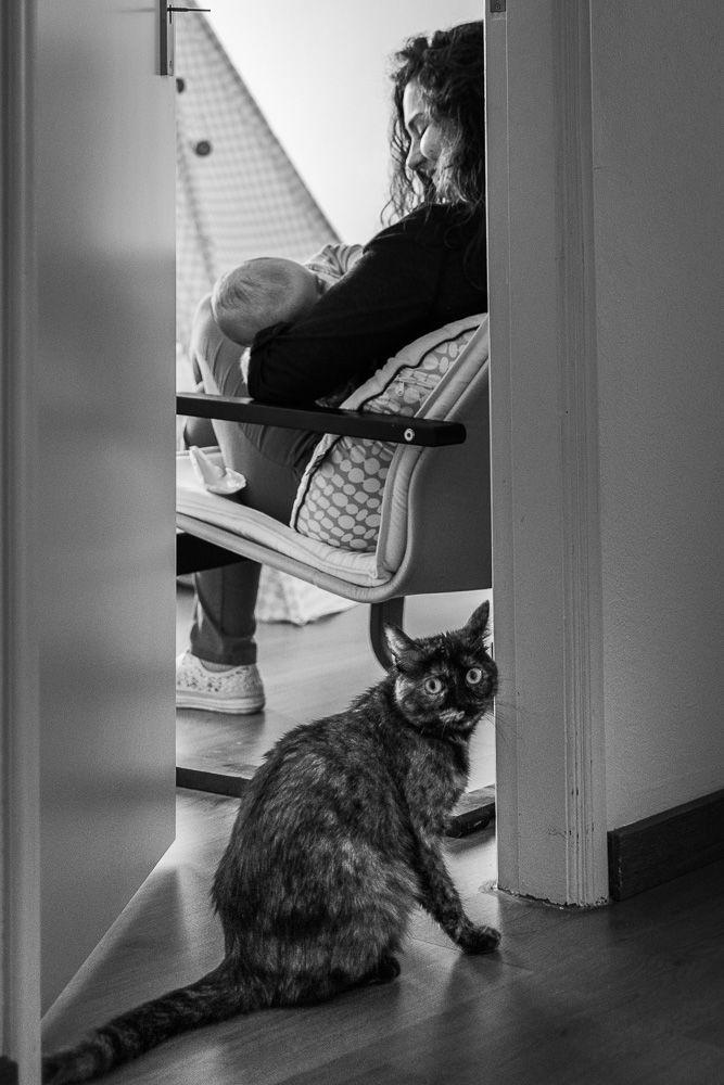 Fotografia documental com criança no banho com gato coimbra e condeixa