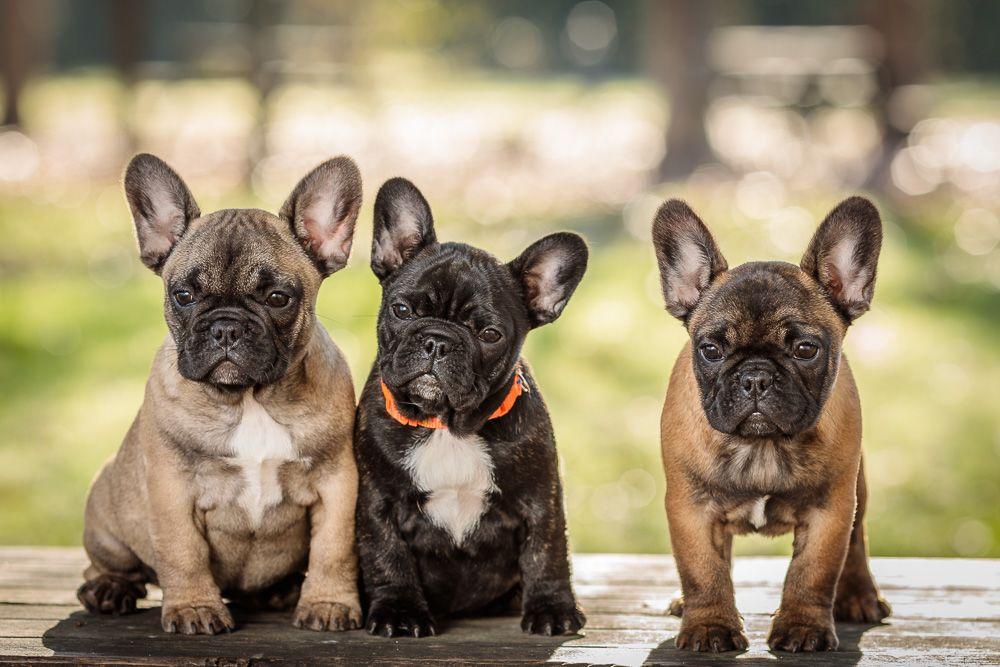 Sessão fotográfica com animal com cães coimbra